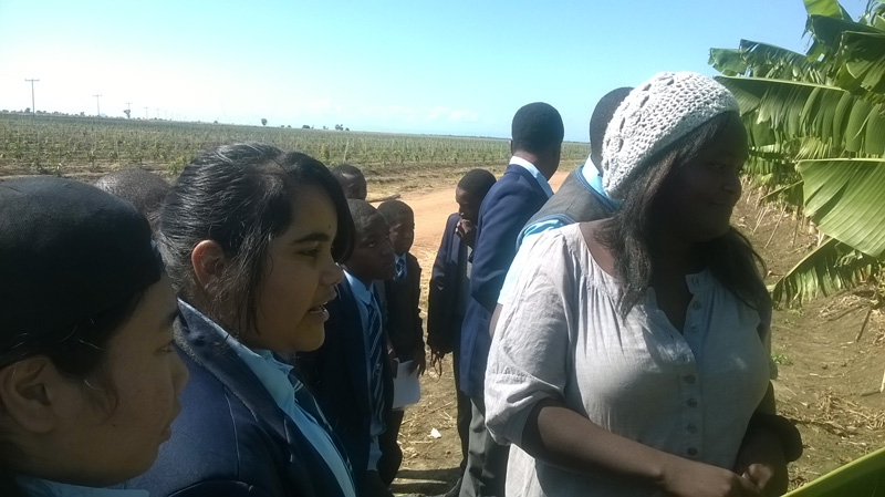 MalawiMangoes17